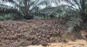 Pengolahan Limbah Kelapa Sawit menjadi Pupuk Organik sebagai Pemanfaatan Limbah Secara Maksimal